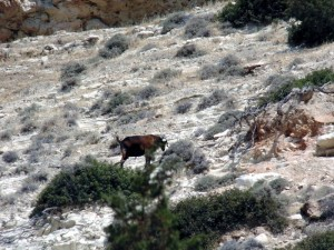Кого можно повстречать или животный мир Кипра