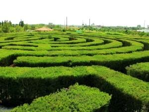 Парк лекарственных трав